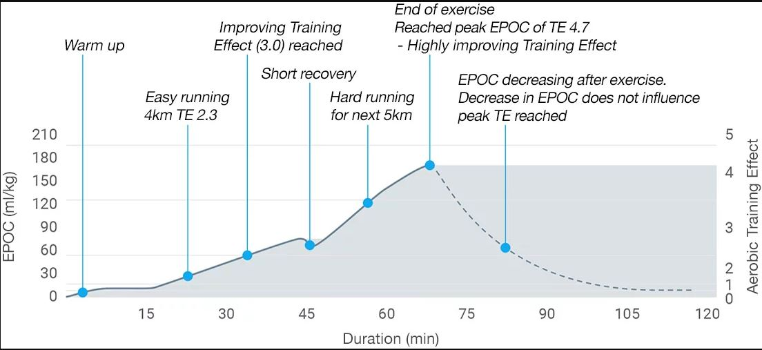 EPOC (Excess Post-exercise Oxygen)